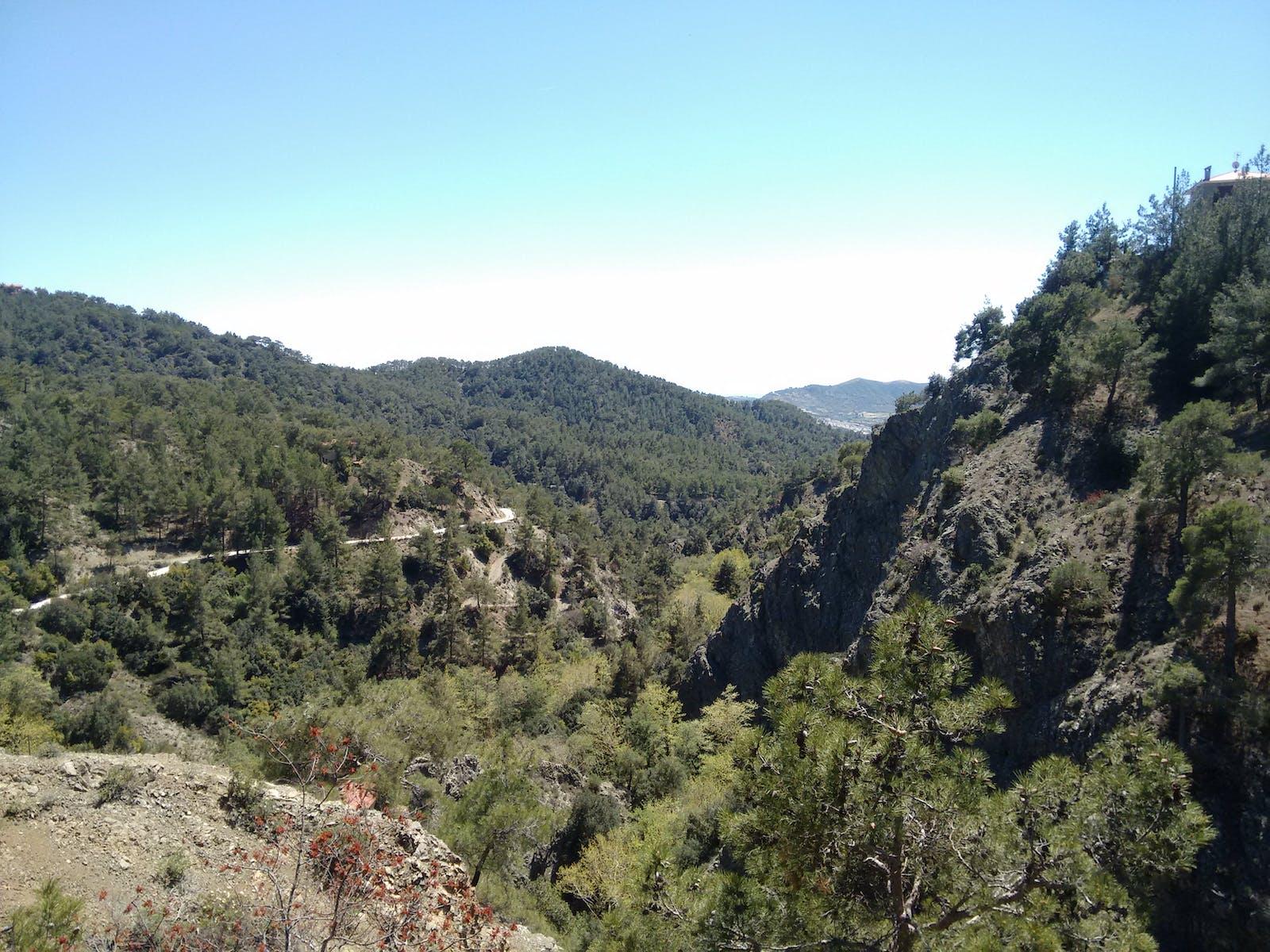 Cyprus Mediterranean Forests