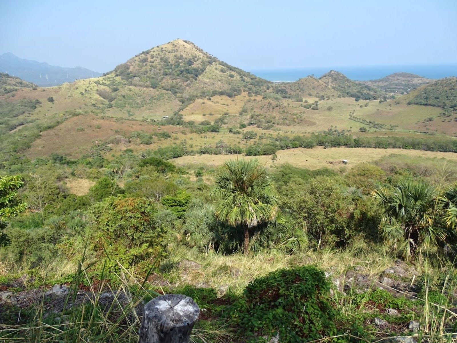 Veracruz Dry Forests