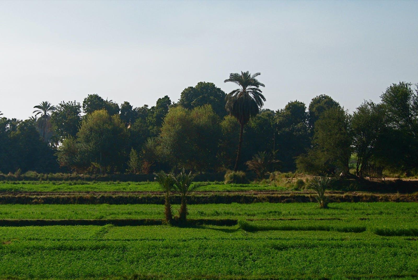 Nile Delta Flooded Savanna