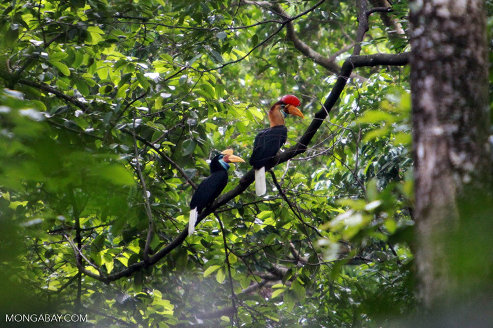 Sulawesi Lowland Rainforests