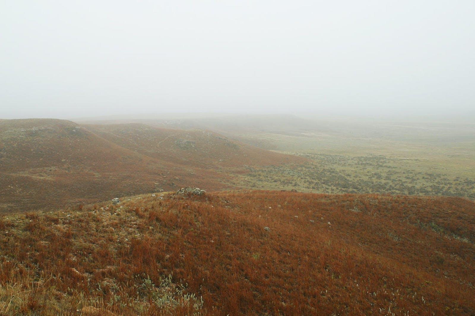 Western Shortgrass Prairie