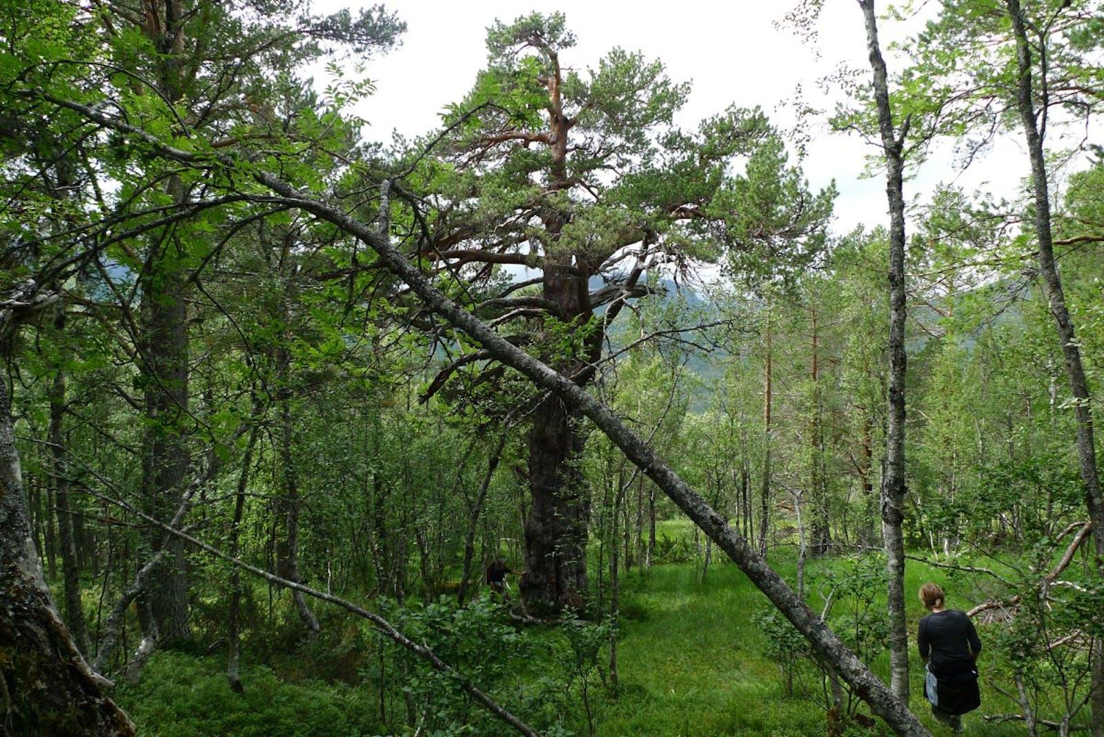 Scandinavian Montane Birch Forest and Grasslands