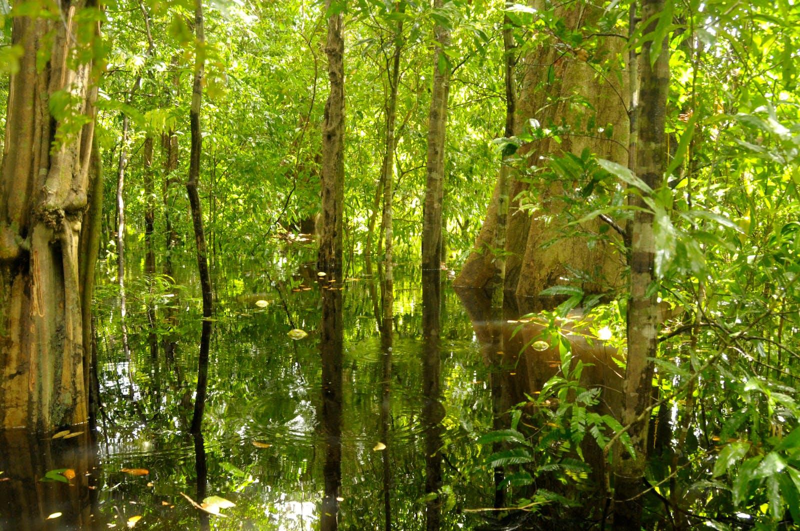 Japurá-Solimões-Negro Moist Forests