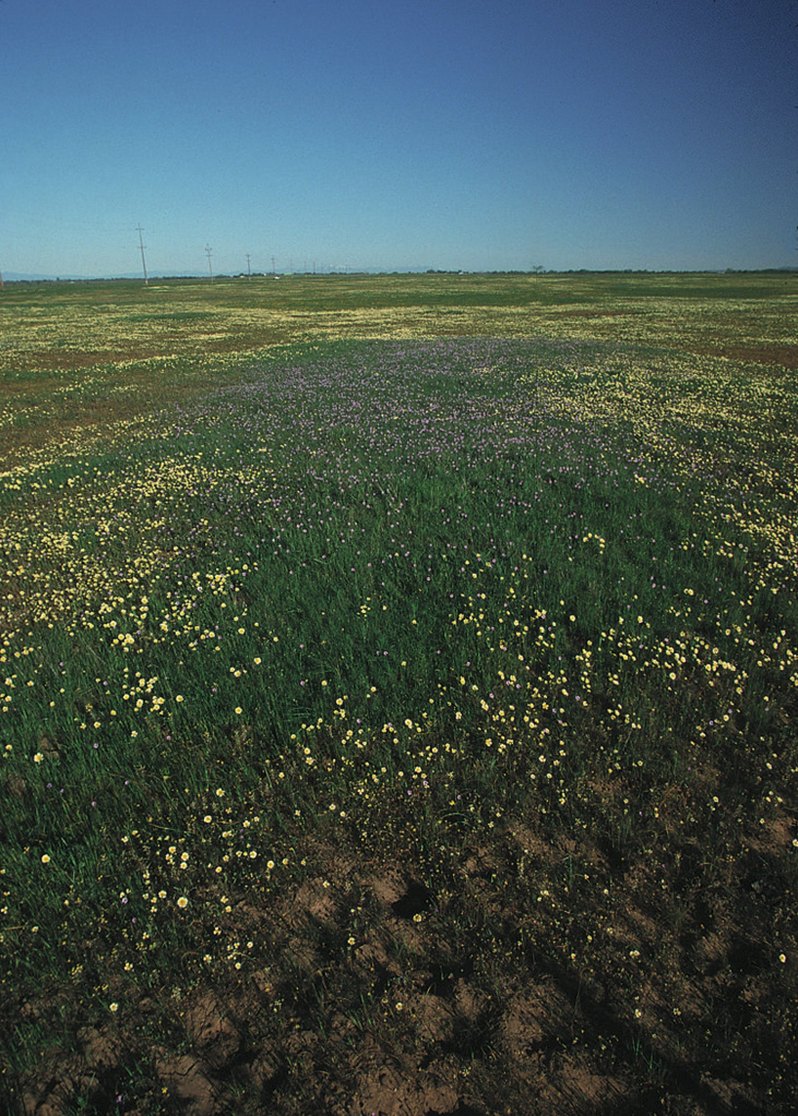 California Central Valley Grasslands