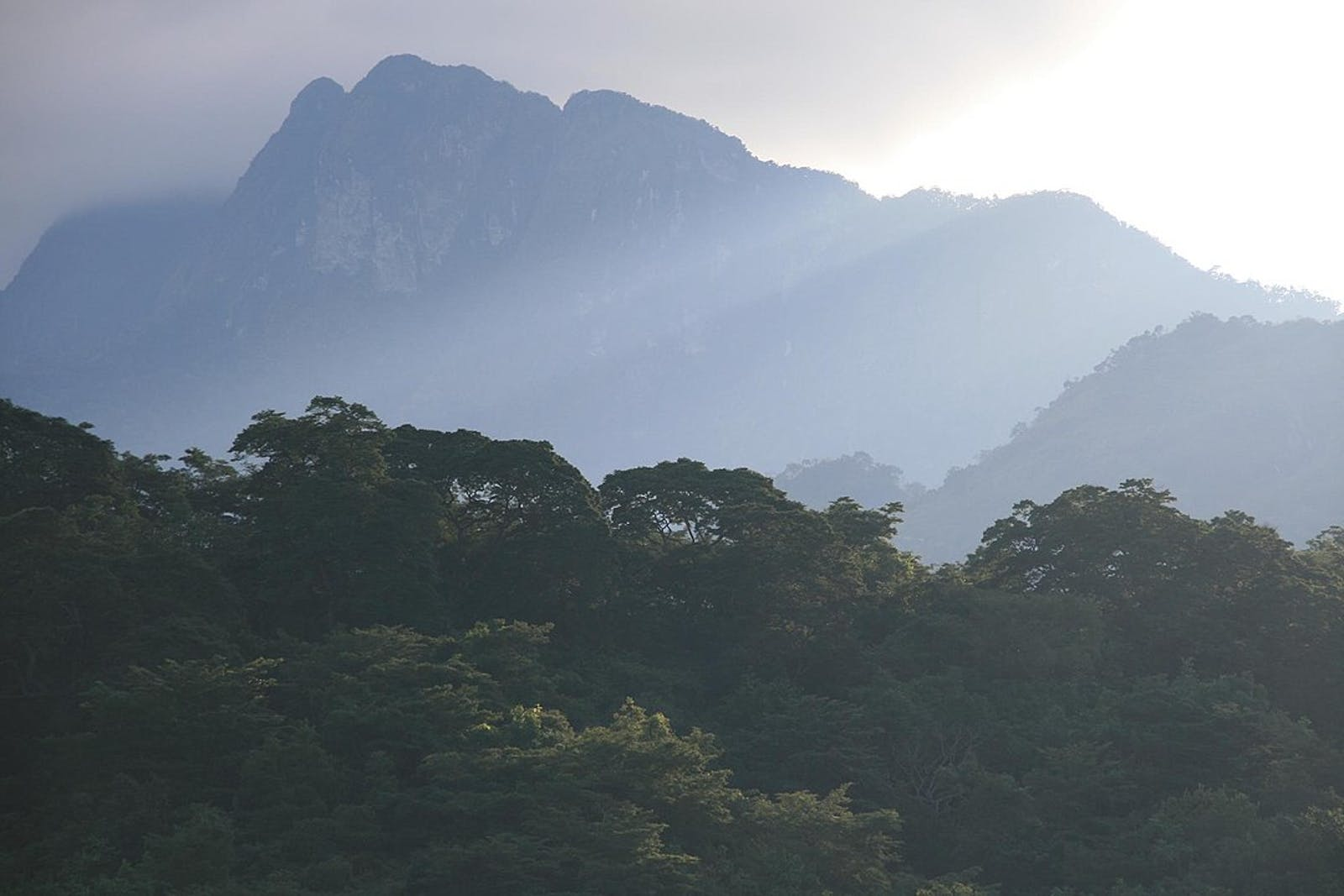 Eastern Arc Forests