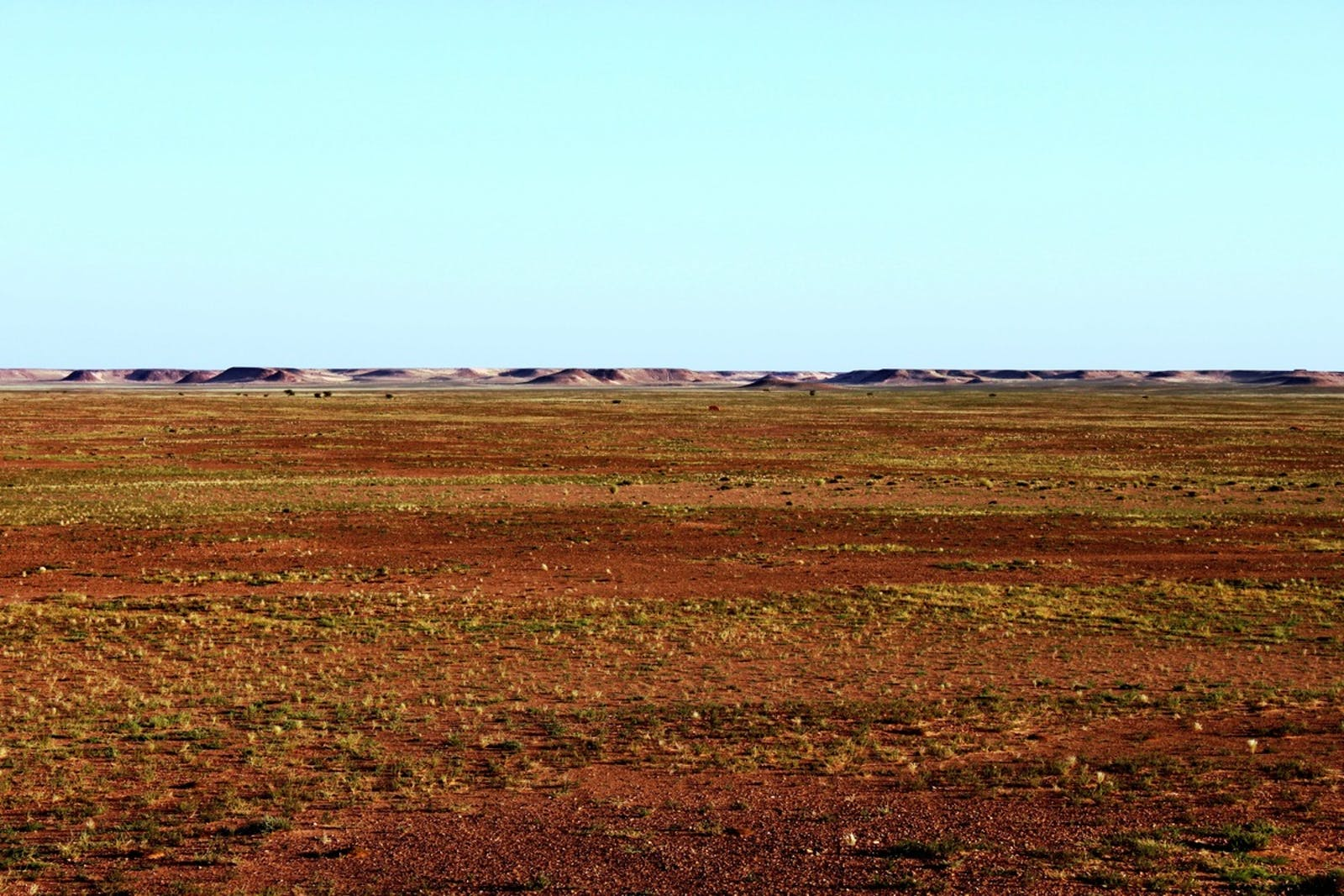 North Saharan Xeric Steppe and Woodlands