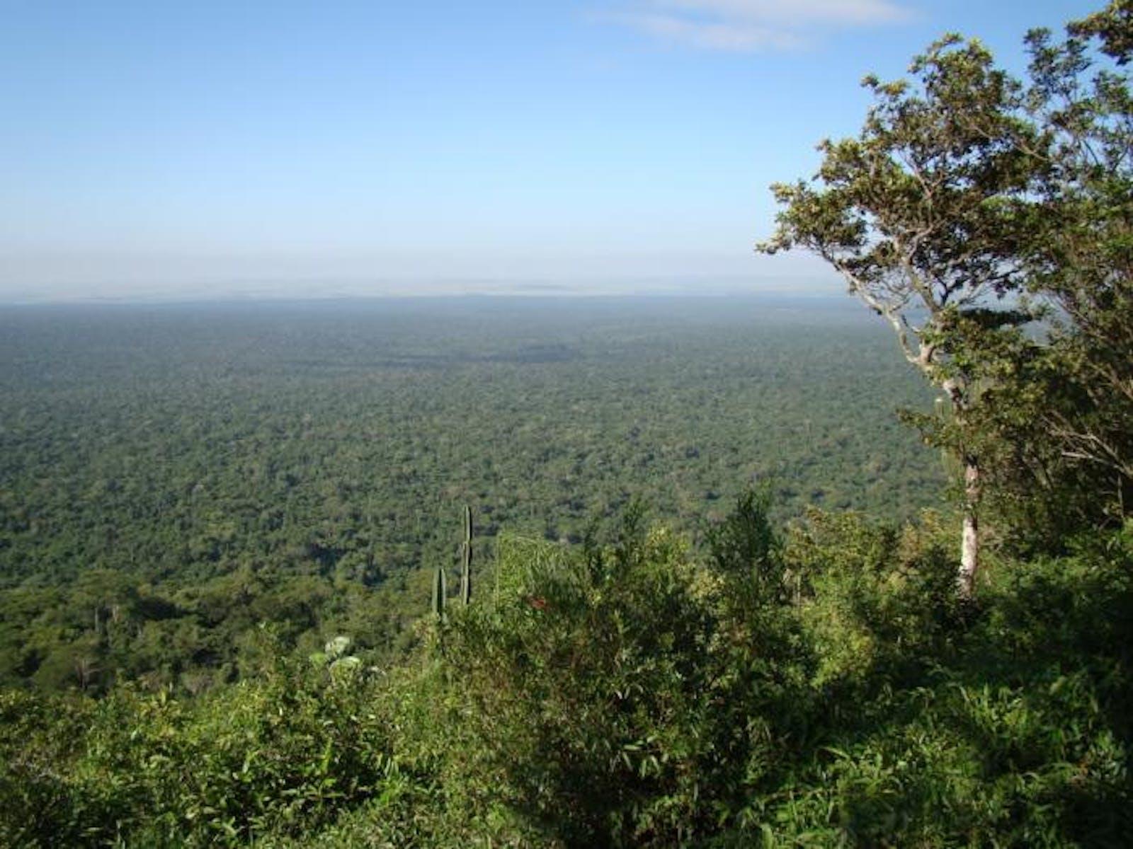 Alto Paraná Atlantic Forests