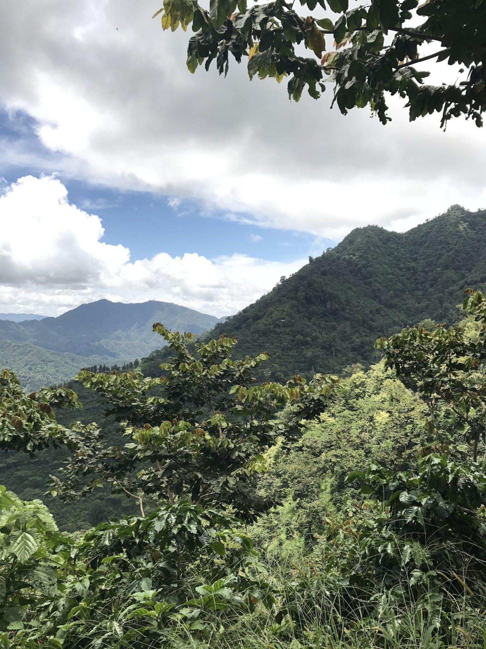 Sierra Madre De Chiapas Moist Forests