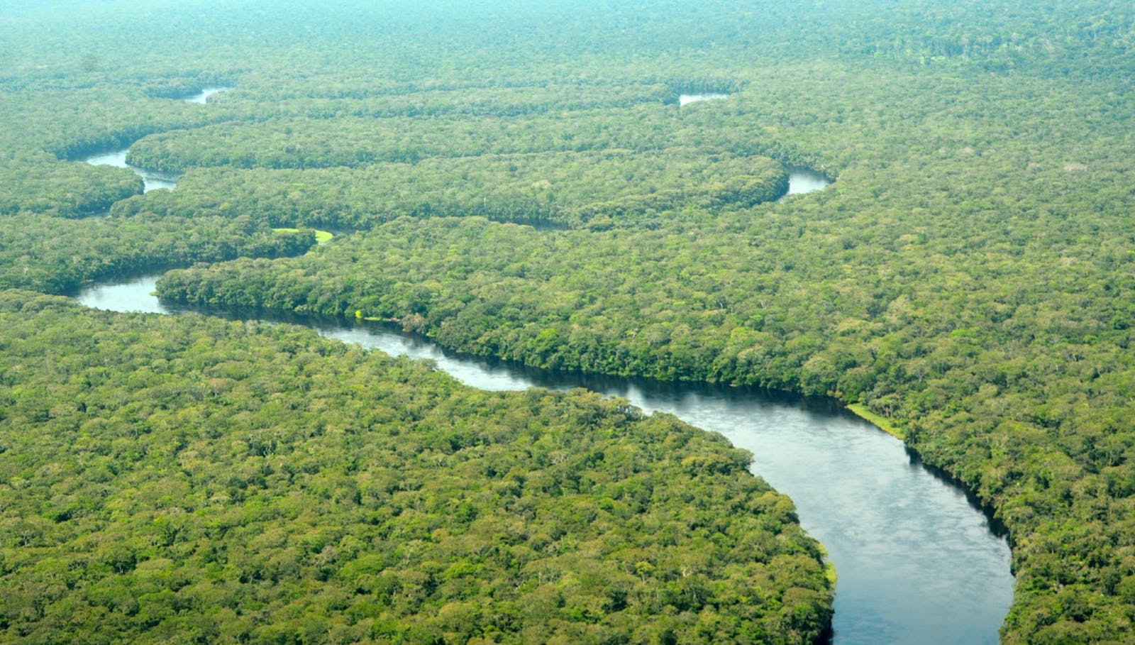 Central Congolian Lowland Forests