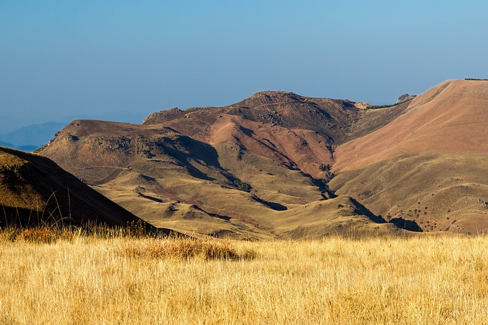 Highveld Grasslands