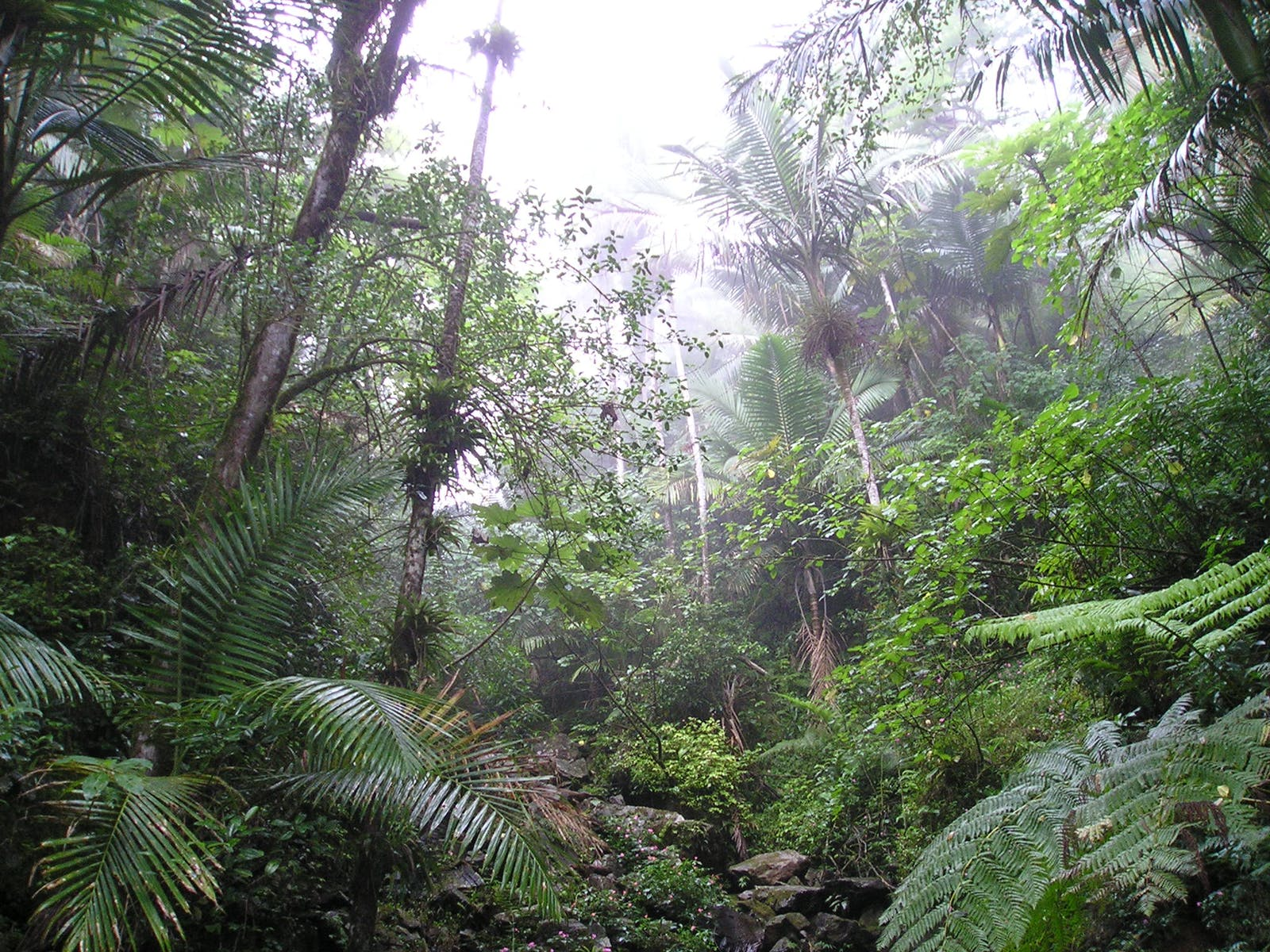 Puerto Rican Moist Forests