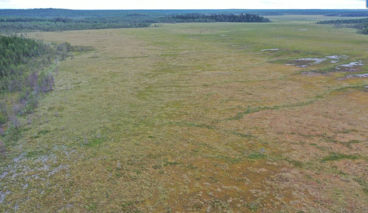 Conserving the Carbon Storehouse in the Peatlands of Karhusuo, Finland
