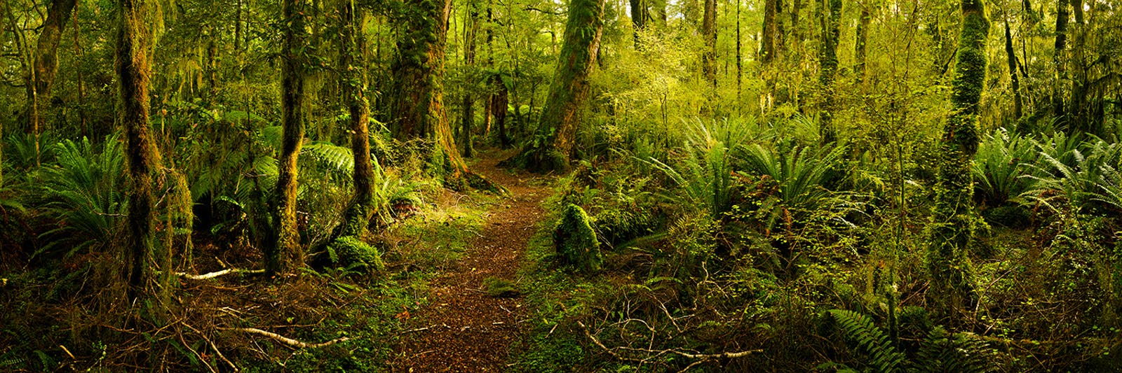 Fiordland temperate forests