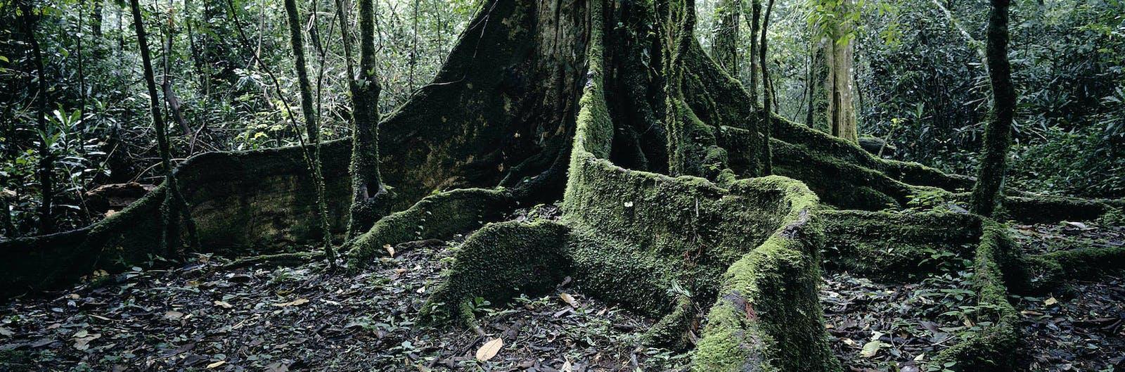 Northern Swahili Coastal Forests