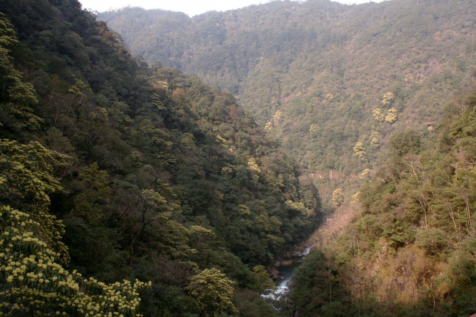 Jian Nan Subtropical Evergreen Forests