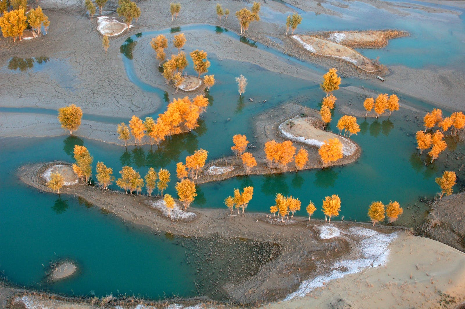 Tarim Basin Deciduous Forests and Steppe