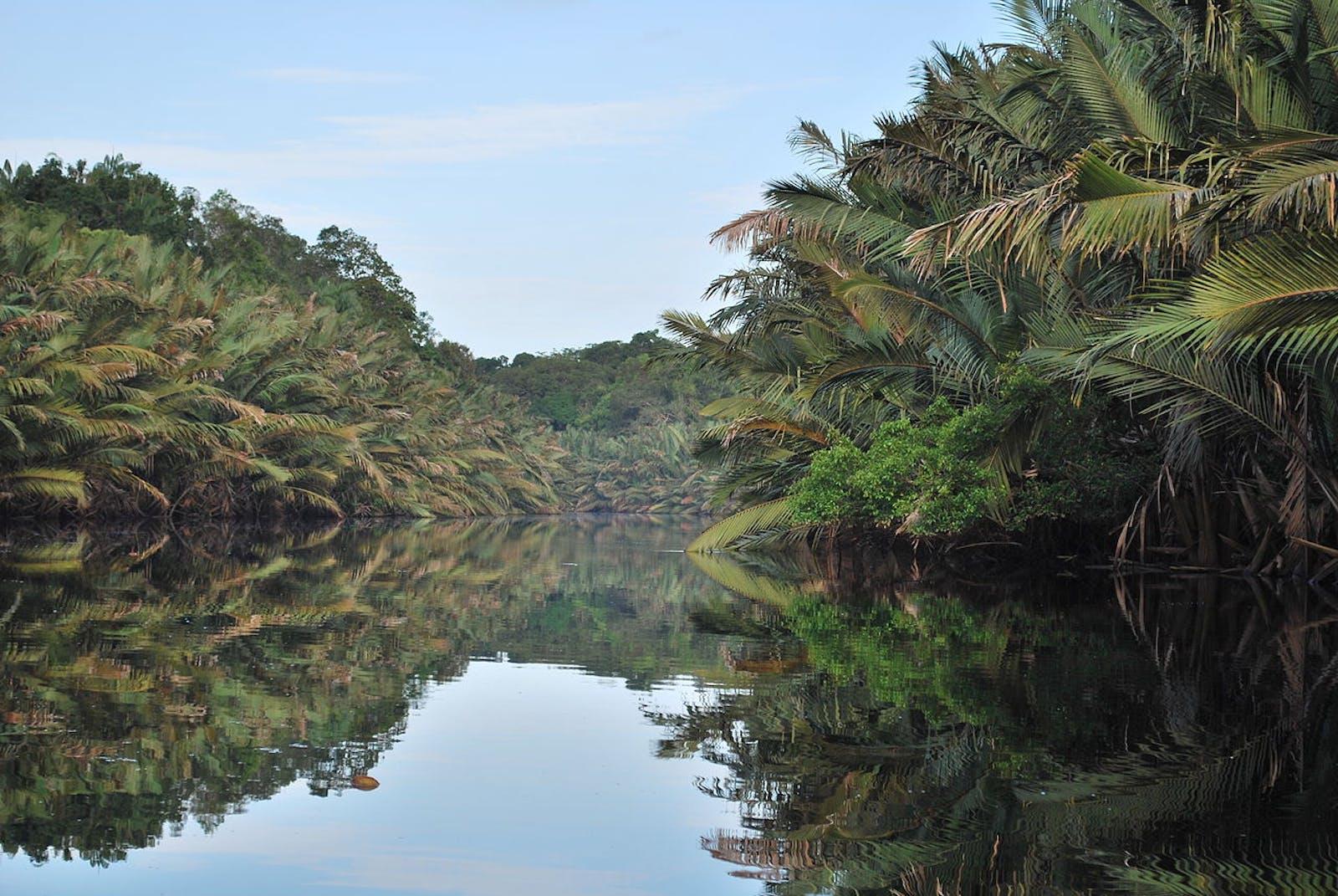 Sumatran Peat Swamp Forests