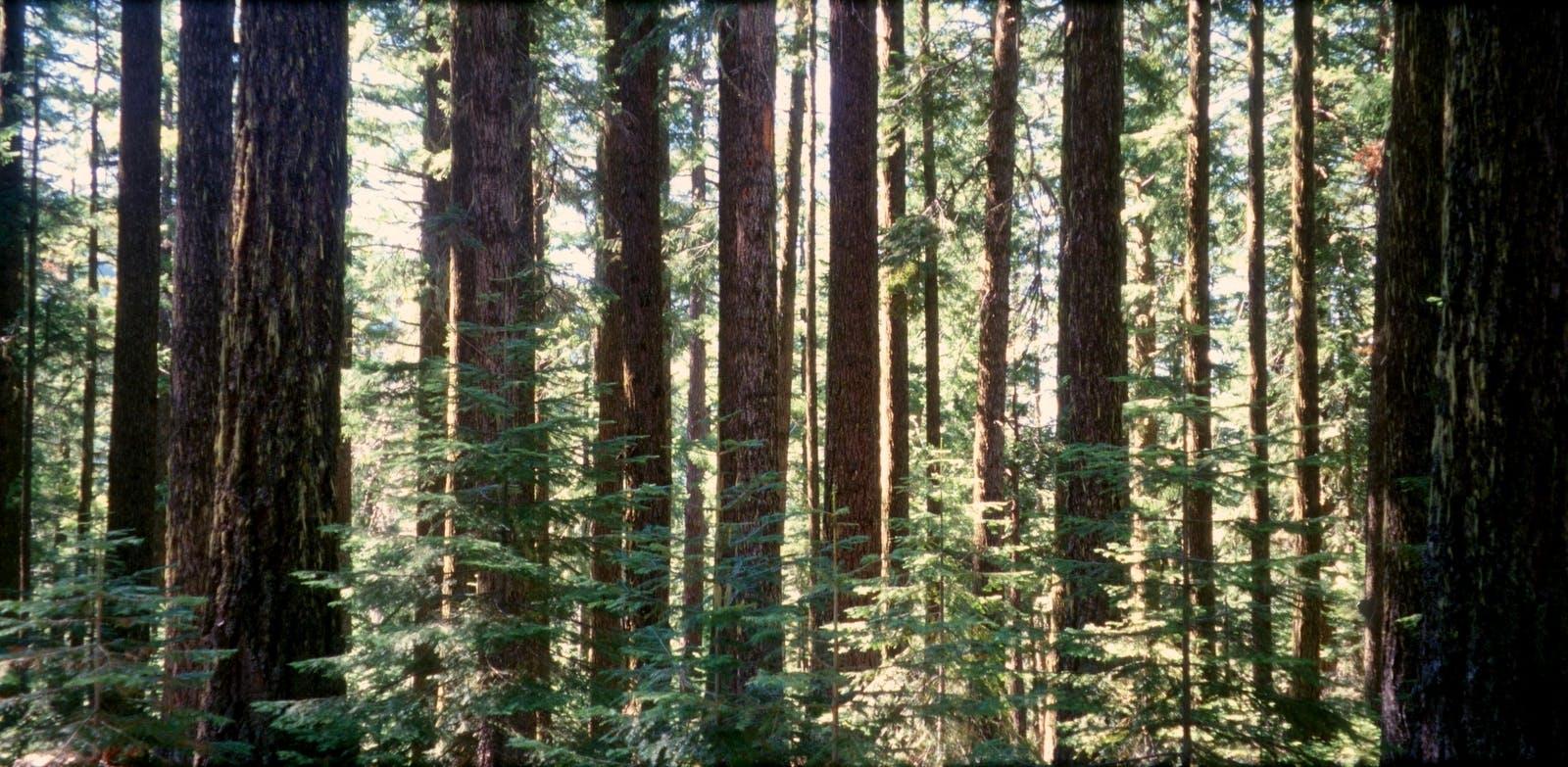 Appalachian-Blue Ridge forests