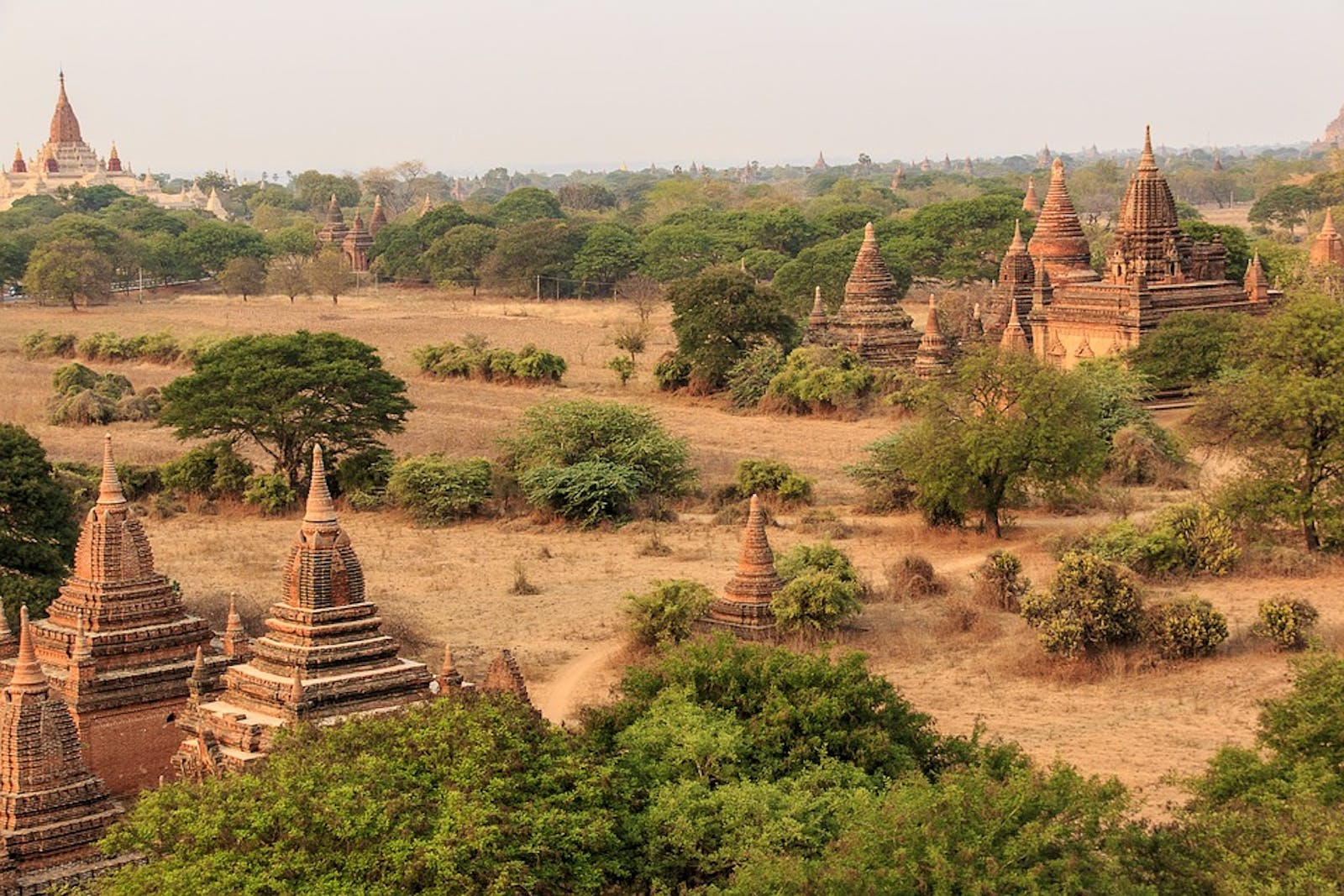 Irrawaddy Dry Forests
