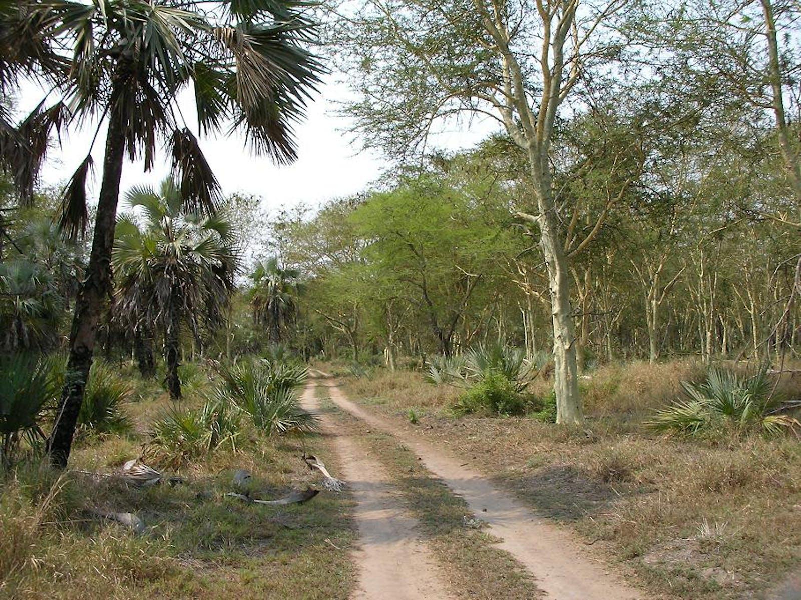 Zambezian-Limpopo Mixed Woodlands