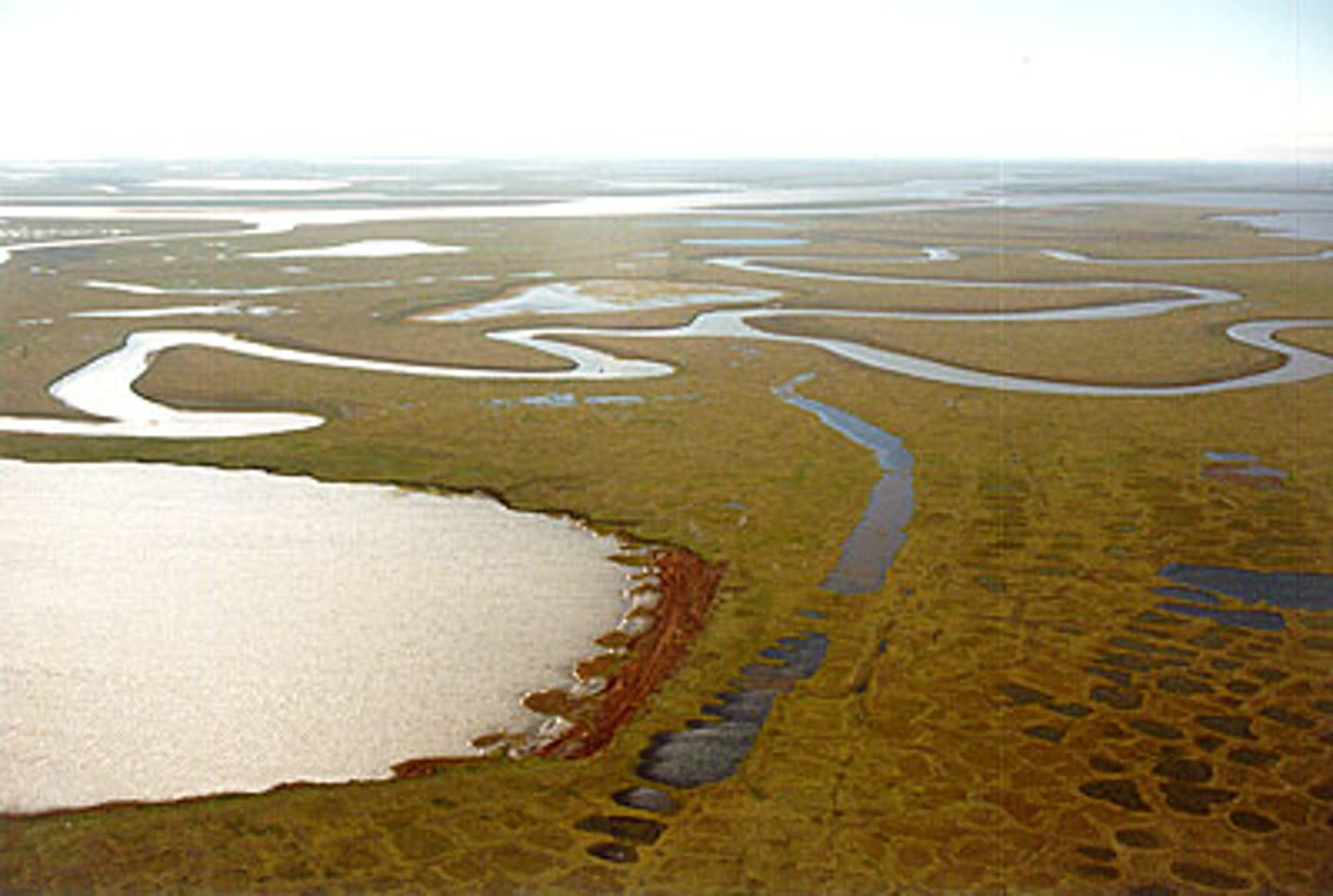 Northeast Siberian Coastal Tundra