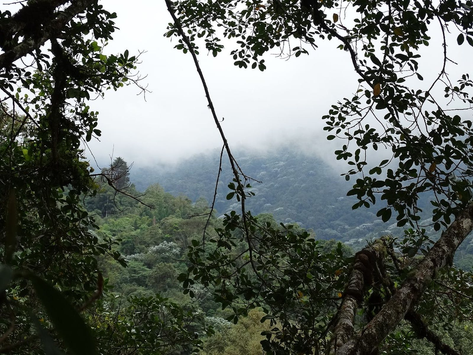 Cauca Valley Montane Forests