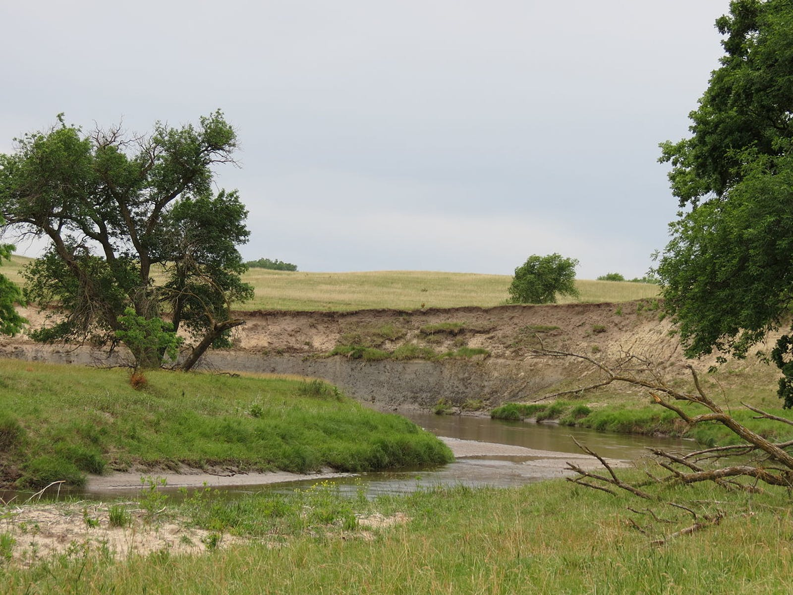 Central-Southern US Mixed Grasslands