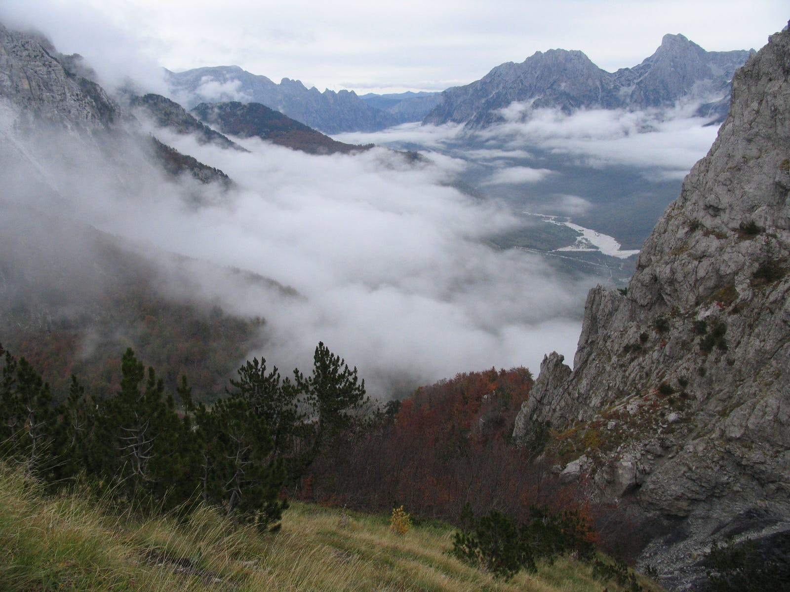 Dinaric Mountains Mixed Forests