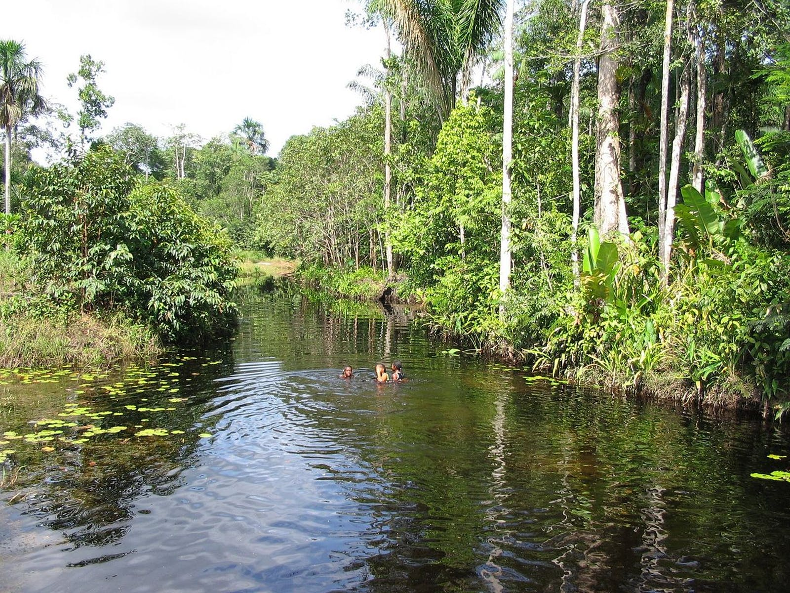 Guianan Freshwater Swamp Forests