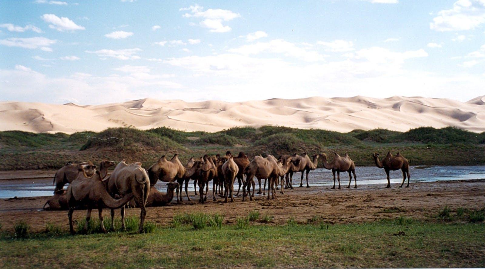 Alashan Plateau Semi-Desert