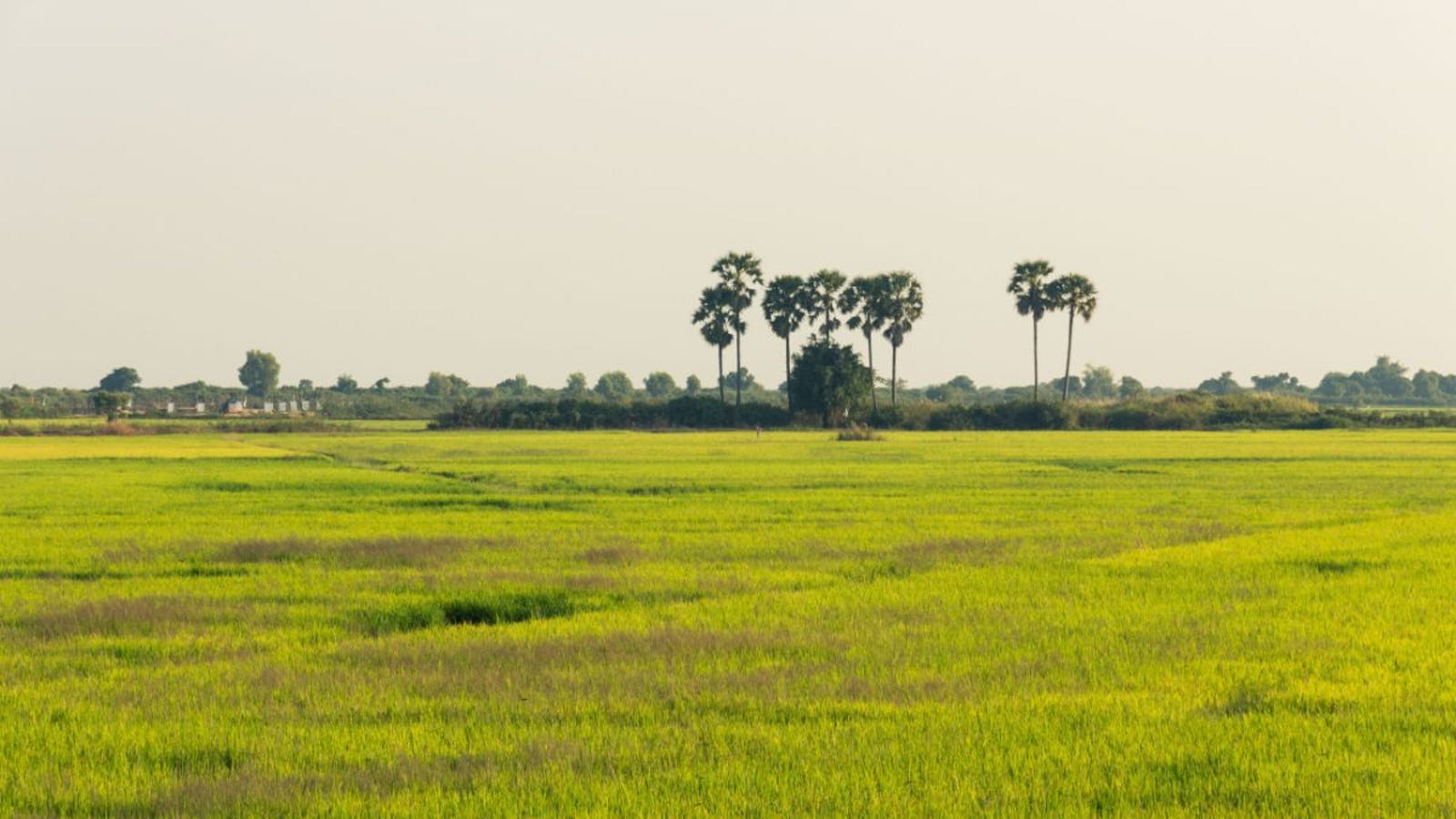 Tonle Sap Freshwater Swamp Forests