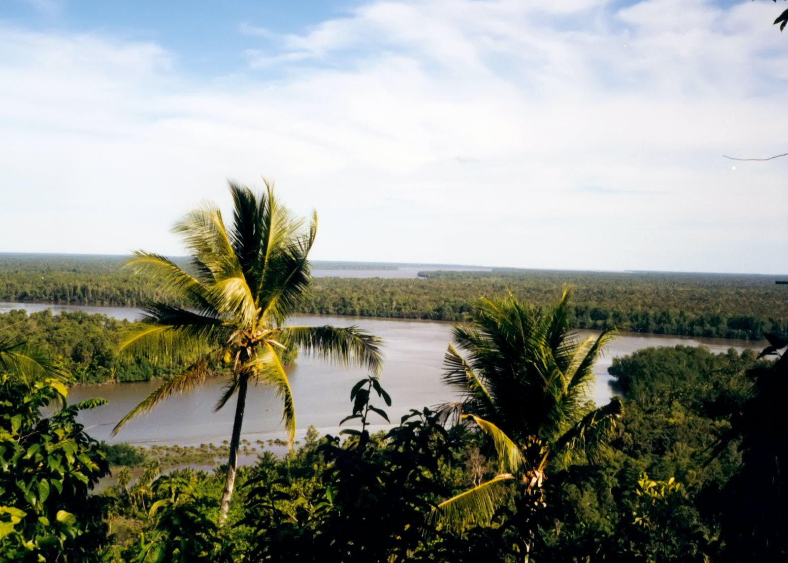 Southern New Guinea Freshwater Swamp Forests