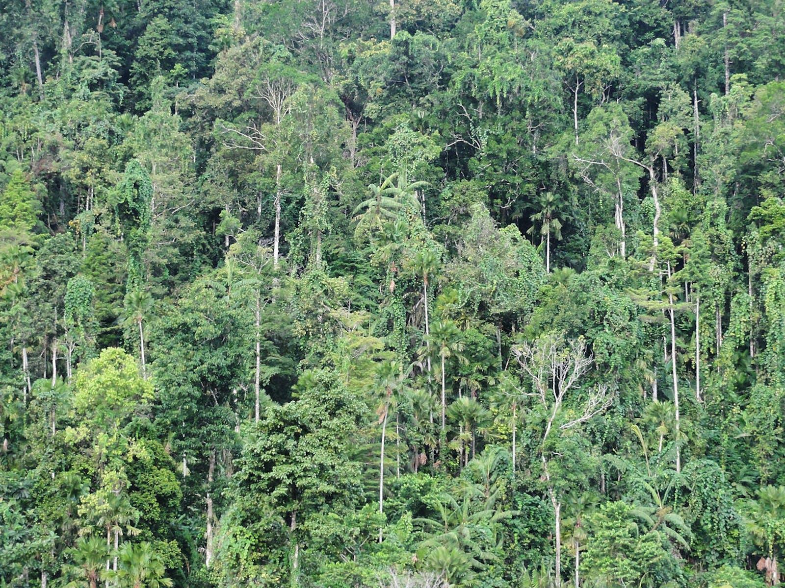 Halmahera Rainforests