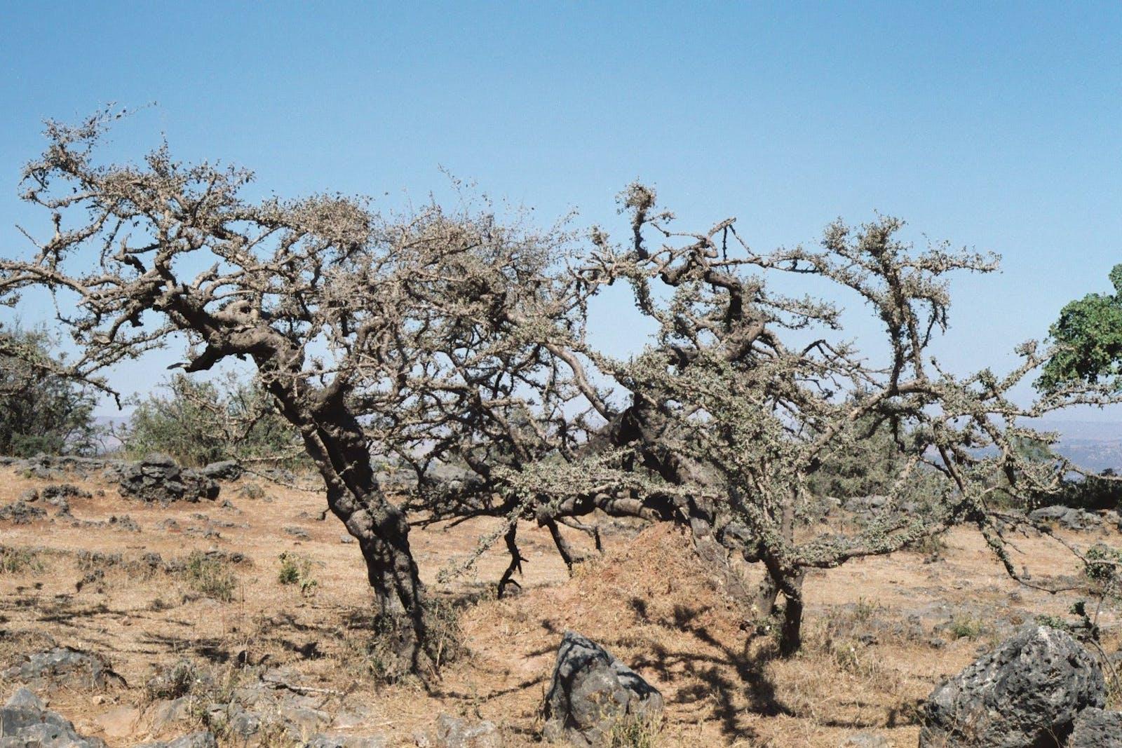 South Arabian Plains and Plateau Desert