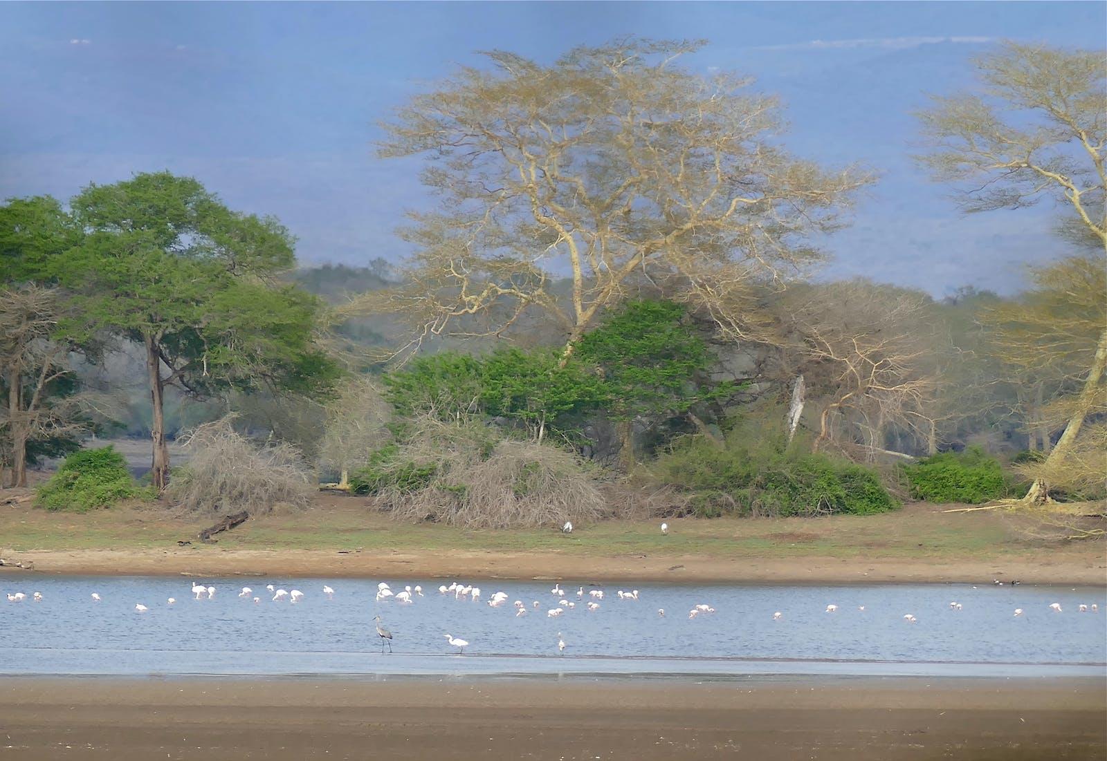 Maputaland Coastal Forests and Woodlands