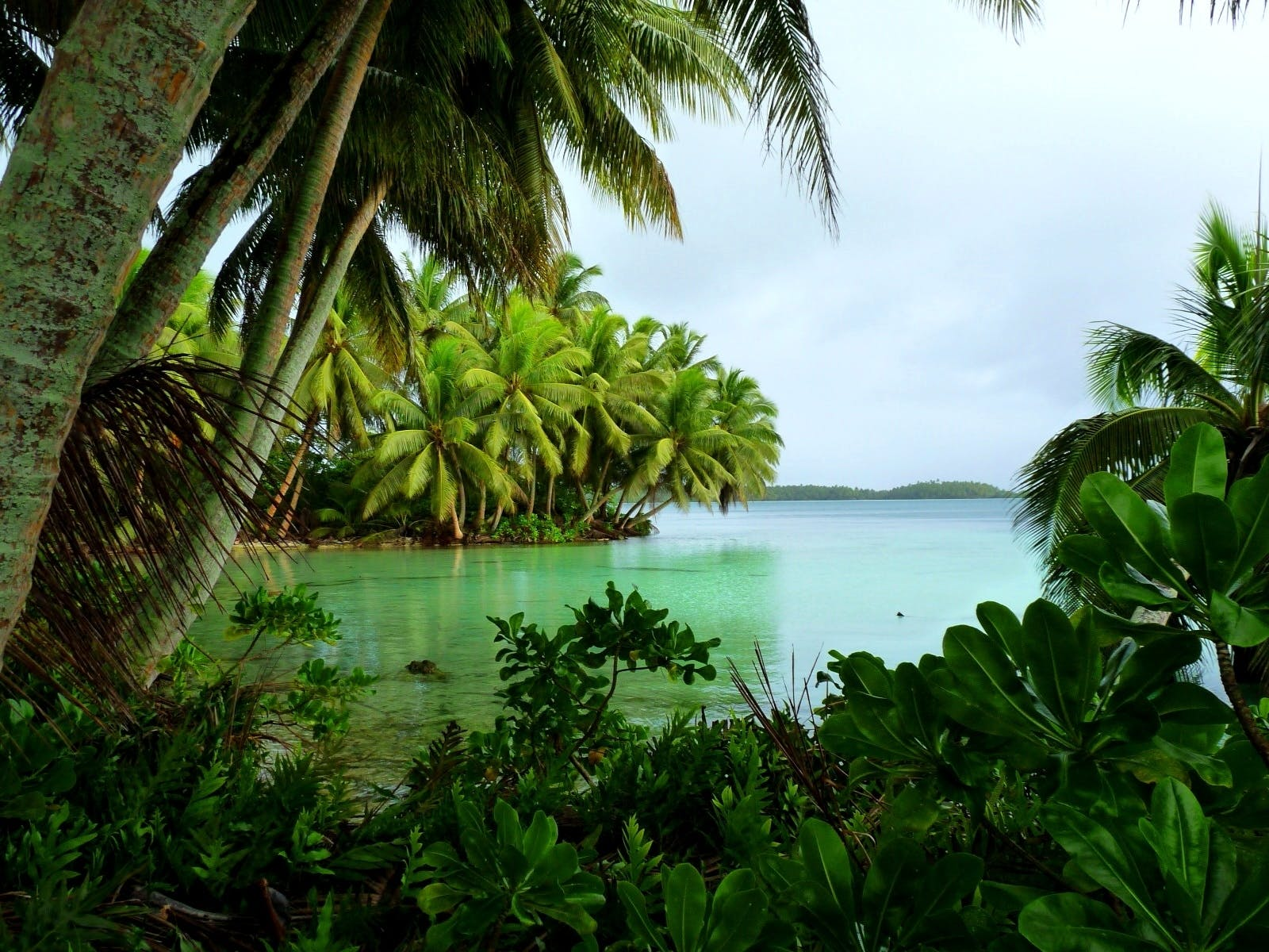 Carolines Tropical Moist Forests