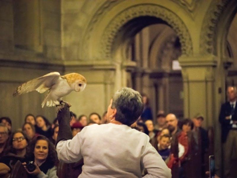 Owl Prowl (3/6/2021)