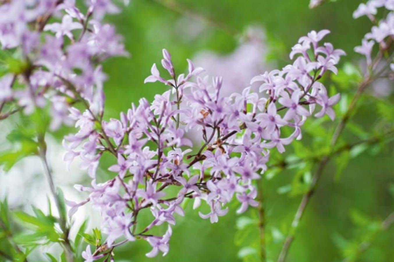 Late April Blooms