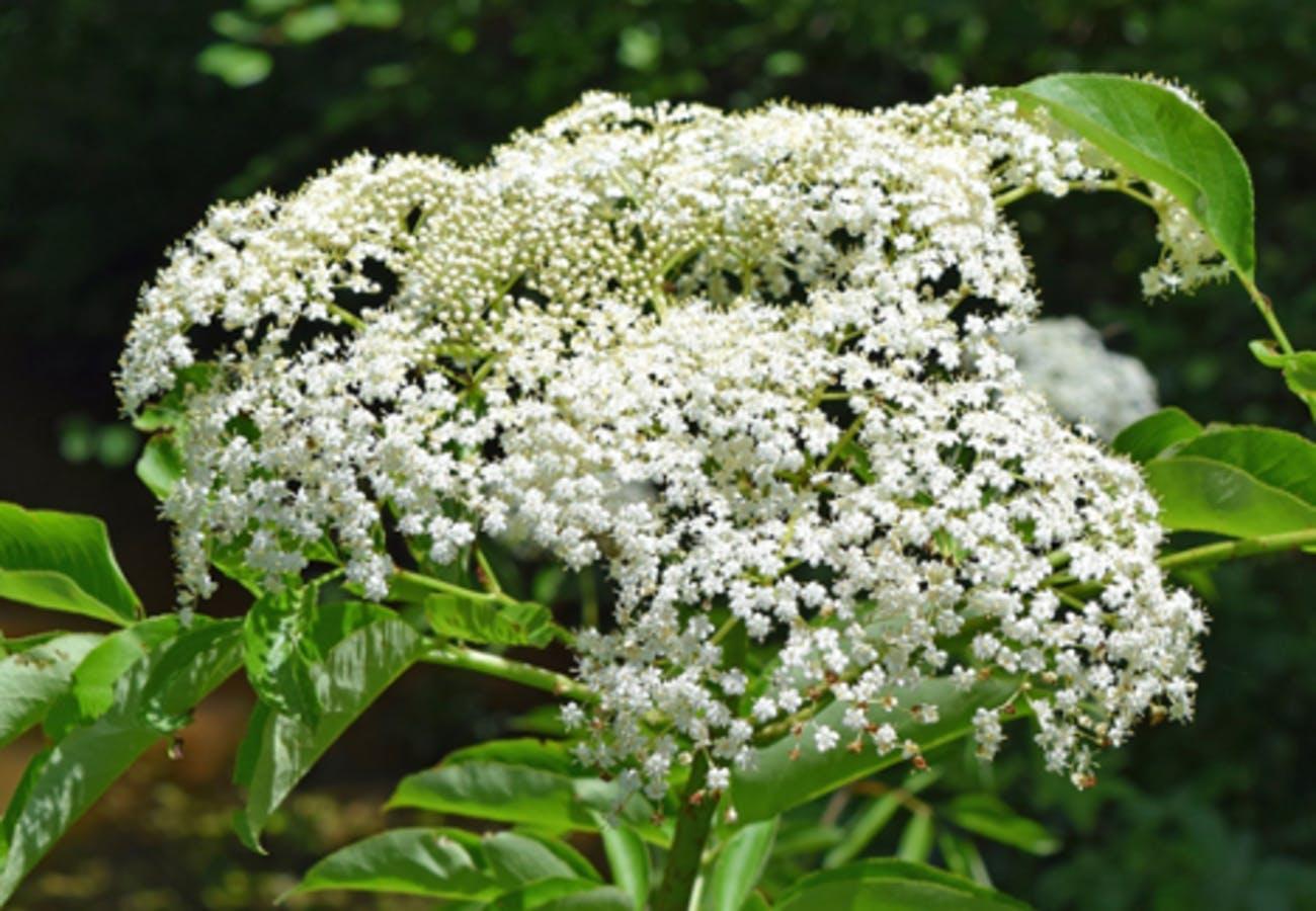 Mid-June Blooms
