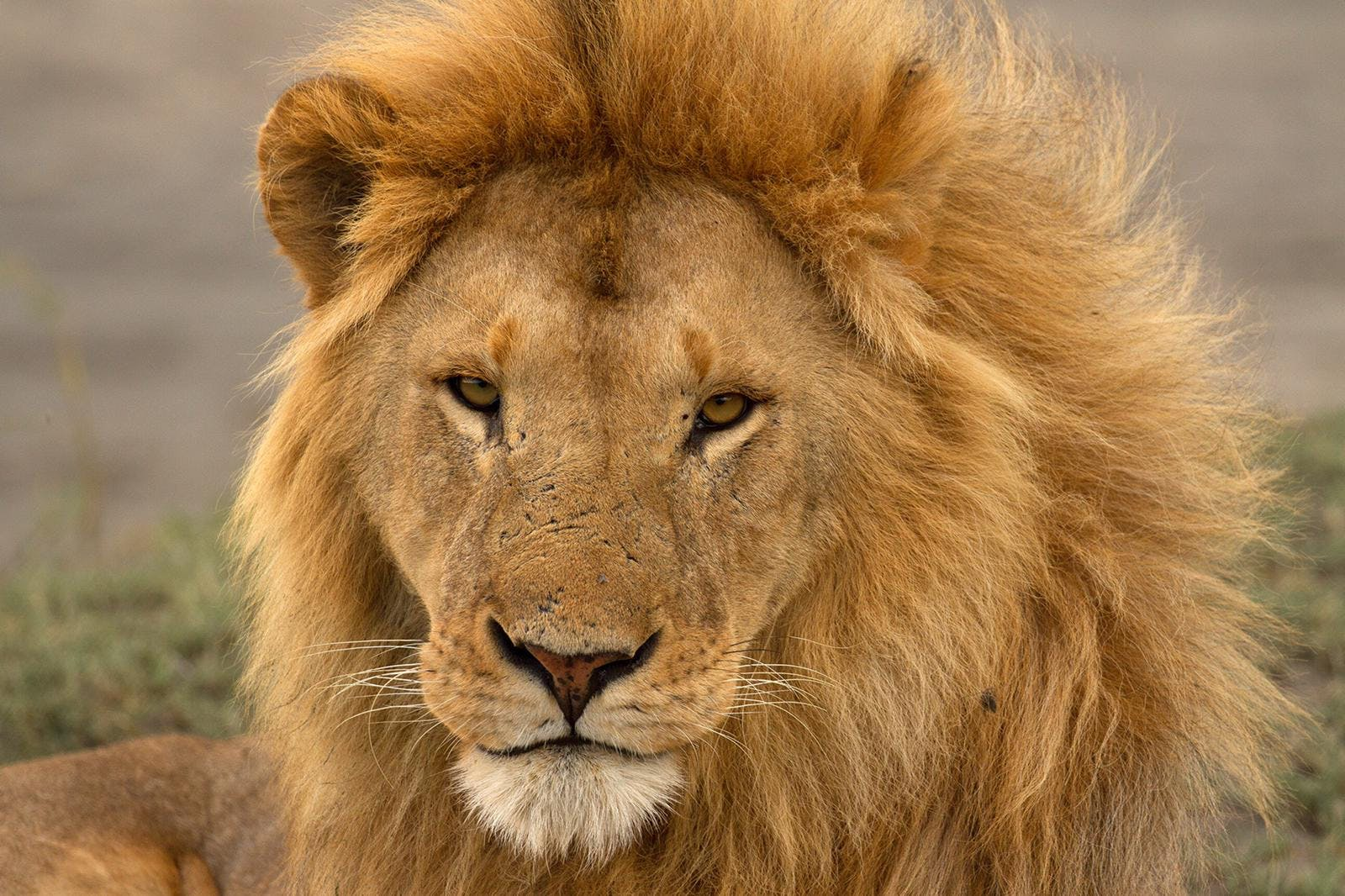The New Lion Economy Unlocking The Value Of Lions And Their Landscapes Lion Recovery Fund