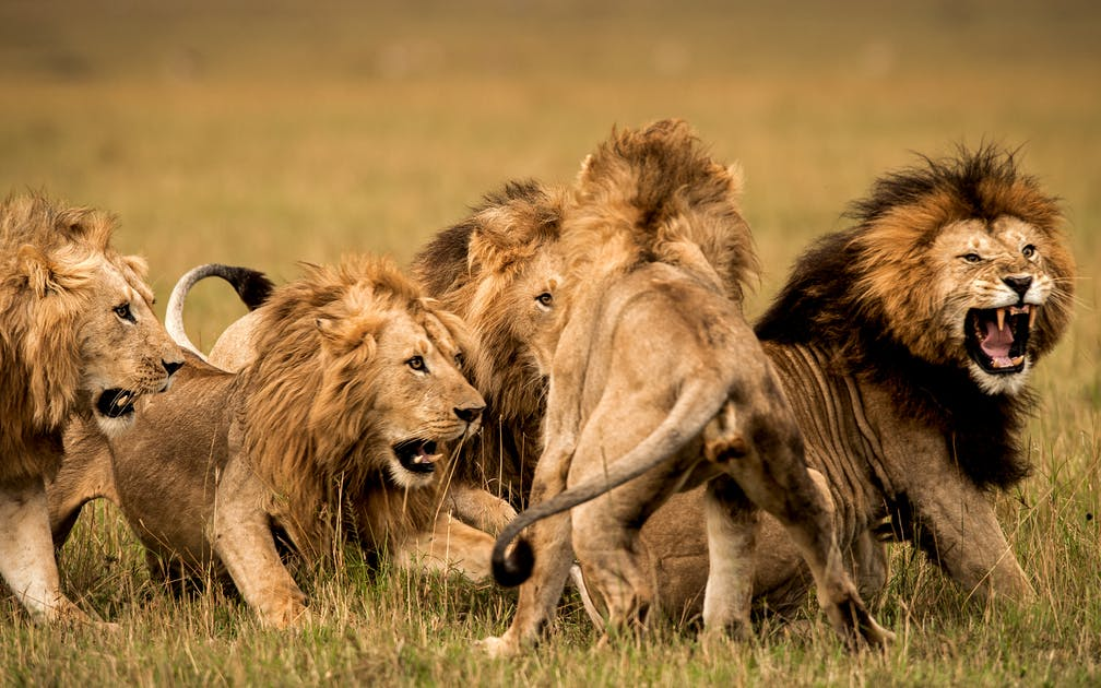 Home Lion Recovery Fund