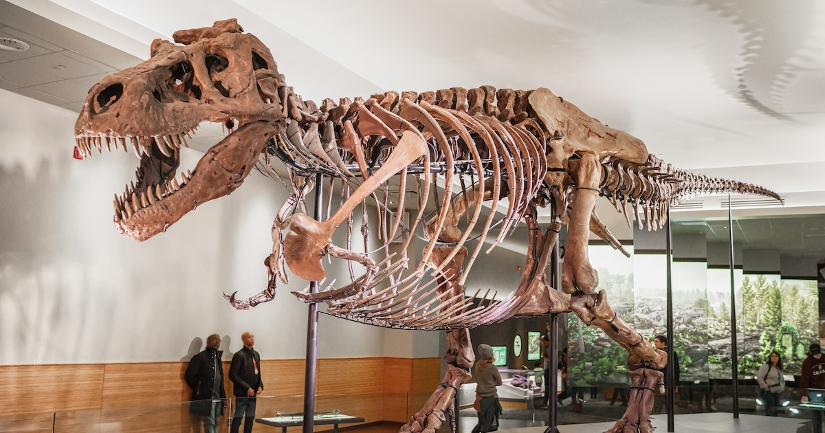 A mass Tyrannosaurus rex grave confirms that they hunted in packs