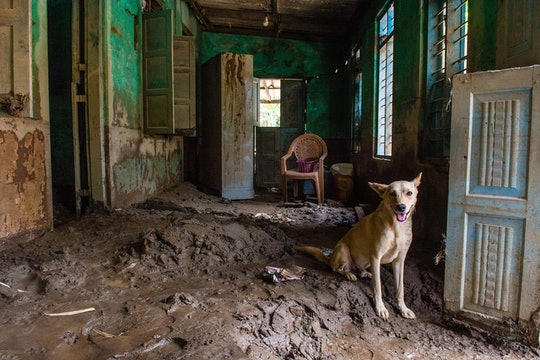 A dog guarding a home filled with mud after flooding