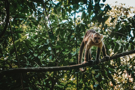 a monkey crouched on a tree branch