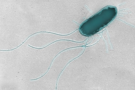 E. coli with tail-like flagella