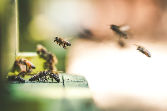 bees flying in to land with their group mates