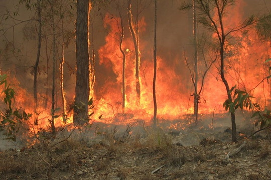 bush fire among a few trees