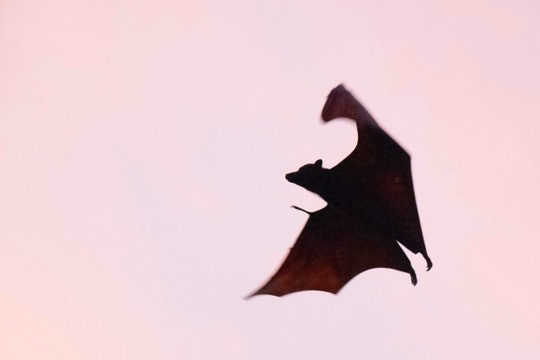dark bat flying against pink sky