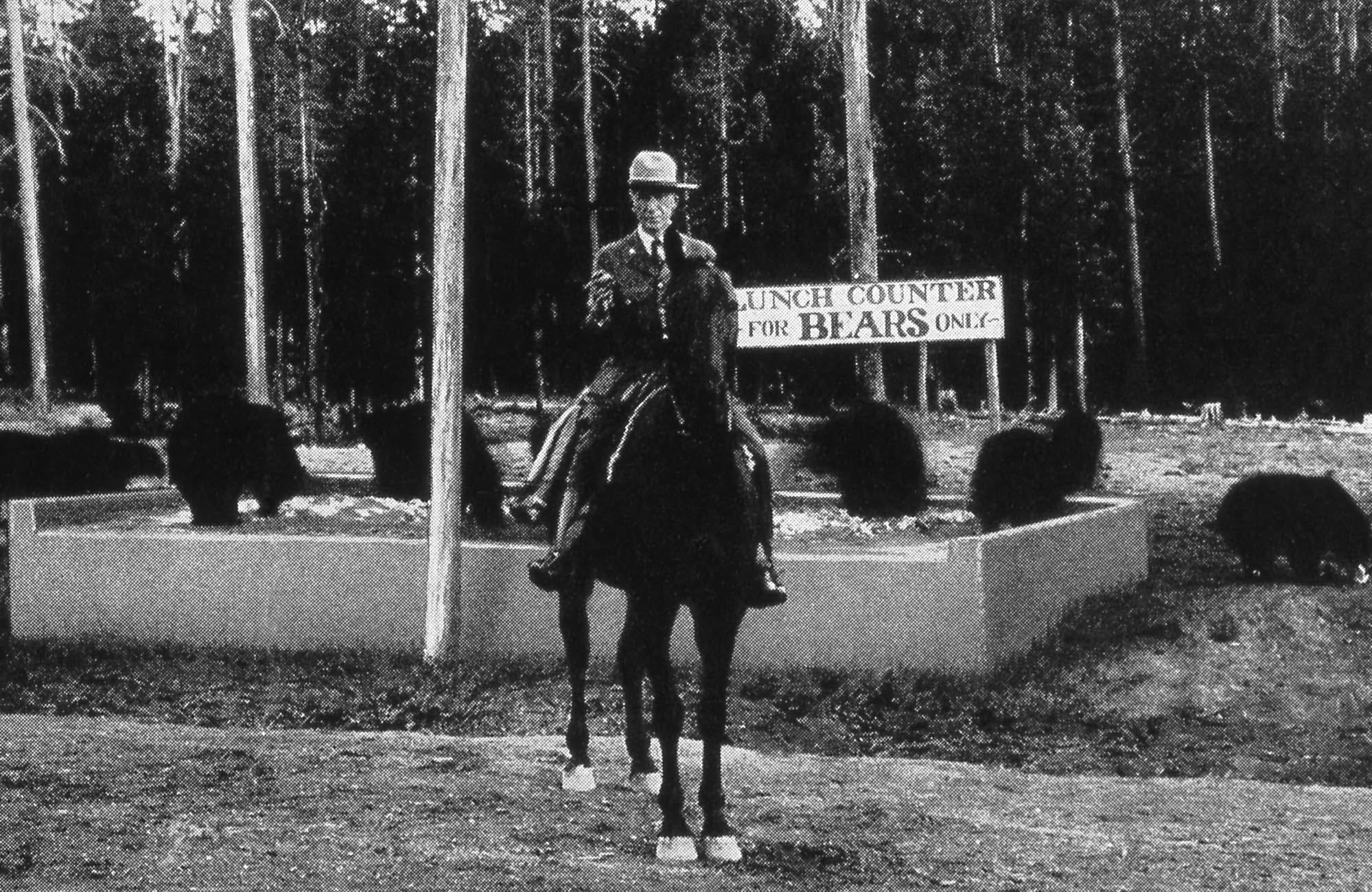 "A park ranger on a horse in front of a sign that reads ""Lunch Counter for Bears Only,"" with bears feeding in a box around it."