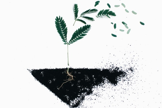 a drawing of a plant in the dirt with its roots visible